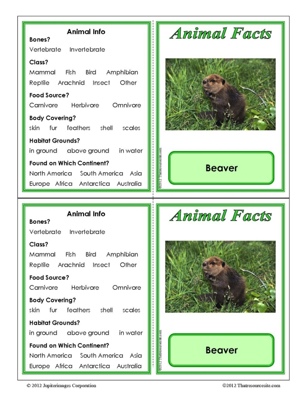 Beaver Animal Facts Learning Card
