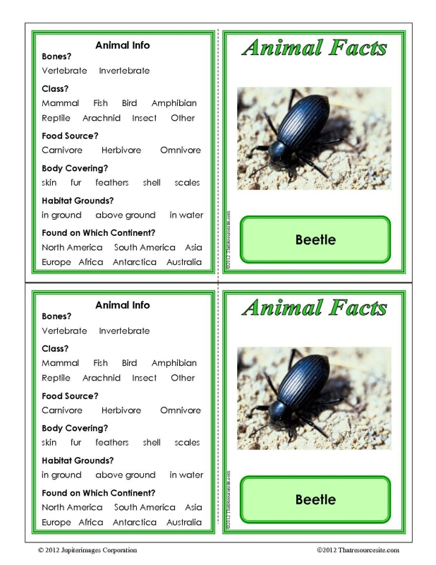 Beetle Animal Facts Learning Card