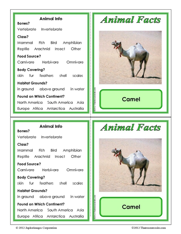 Camel Animal Facts Learning Card