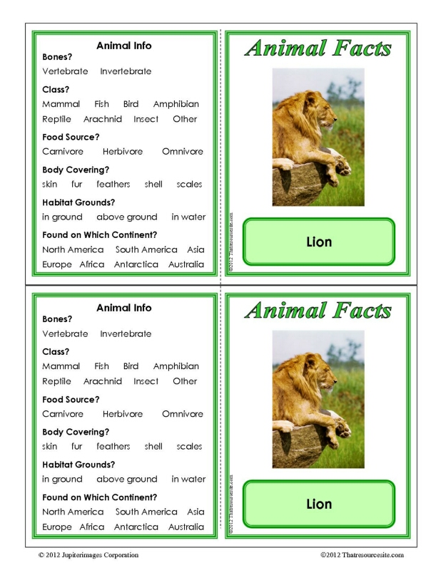 Lion Animal Facts Learning Card
