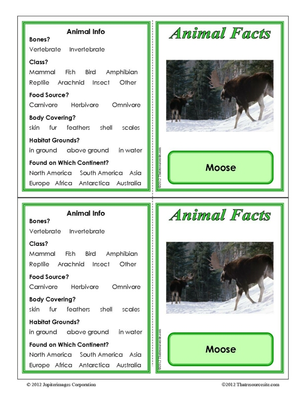 Moose Animal Facts Learning Card