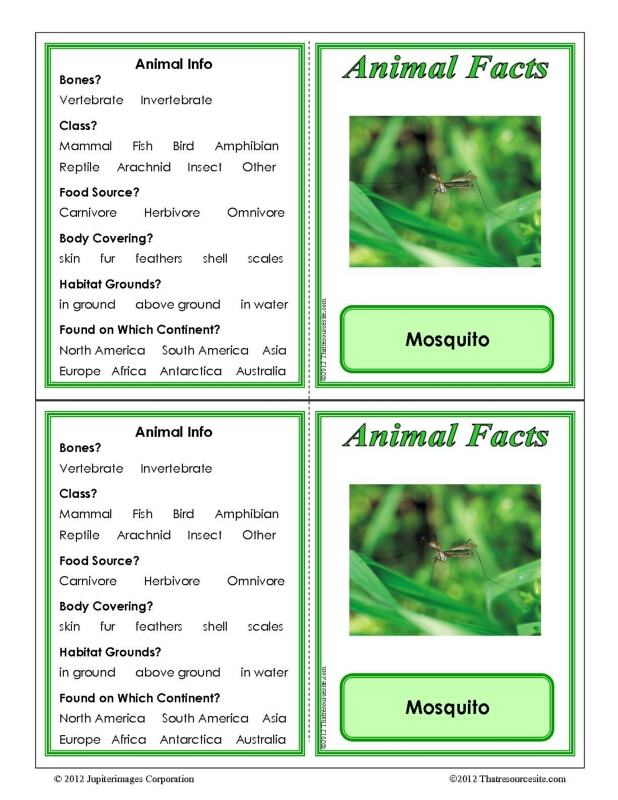Mosquito Animal Facts Learning Card