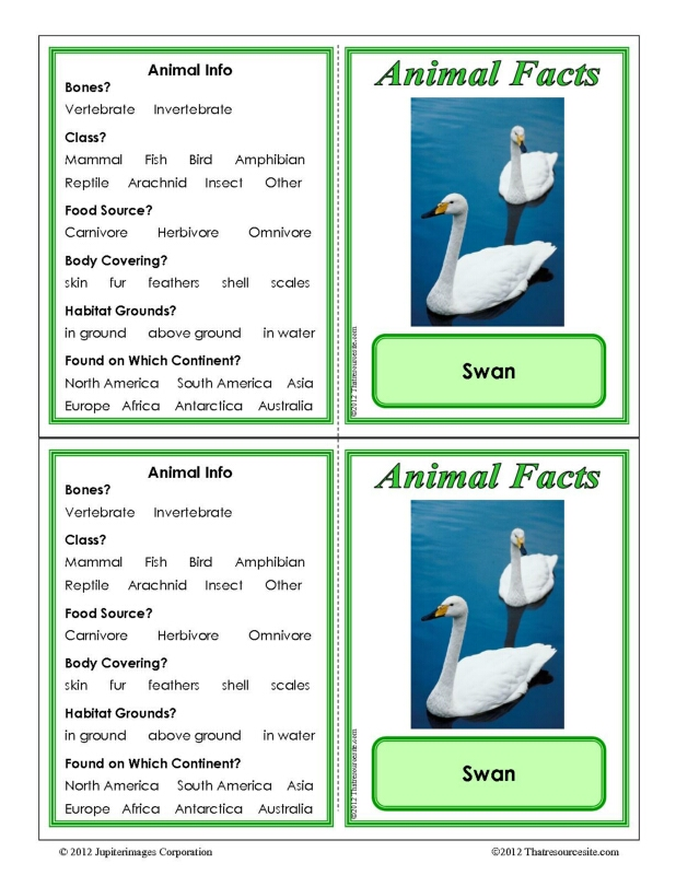 Swan Animal Facts Learning Card