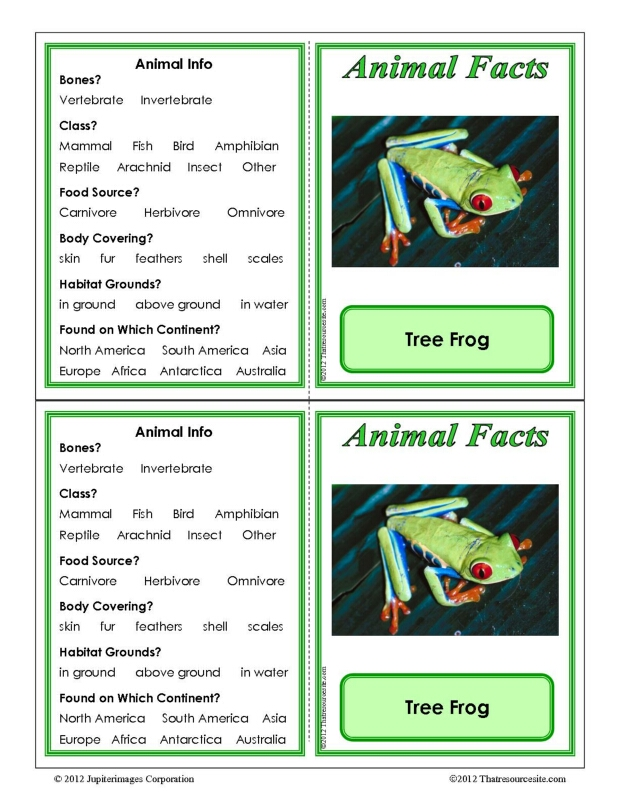 Tree Frog Animal Facts Learning Card