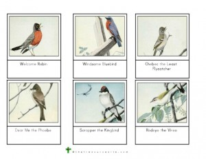 Burgess Bird Book Montessori Card Set 2