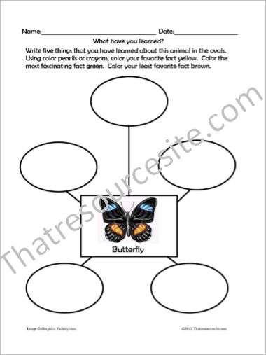 Animal Traits Worksheets Featuring Insects
