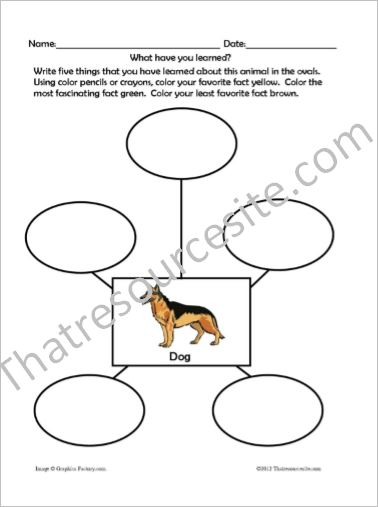 Animal Traits Worksheets Featuring Mammals