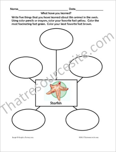 Animal Traits Worksheets Featuring Ocean Animals