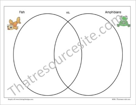 Animal Venn Comparison Worksheet Set
