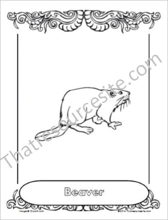 Beaver Animal Coloring Sheet