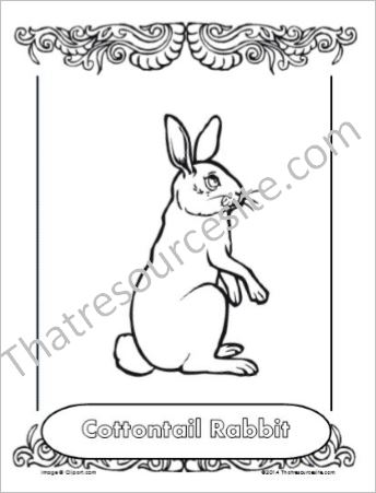 Cottontail Rabbit Animal Coloring Sheet