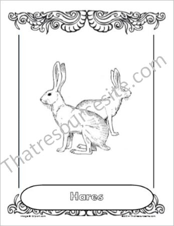 Hares Animal Coloring Sheet