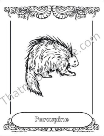 Porcupine Animal Coloring Sheet